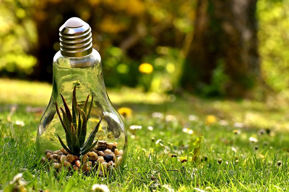 žiarovka v prírode