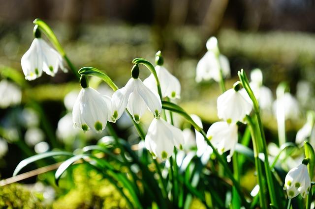 Jar volá mocným hlasom