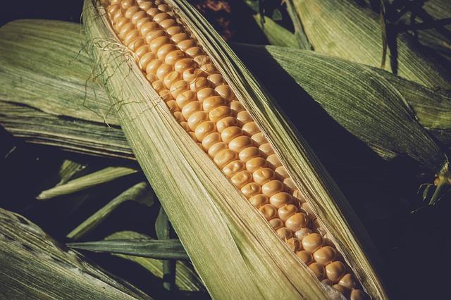 kukuřicew
